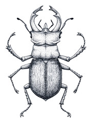 Stag beetle tattoo art. Lucanus cervus. Dot work tattoo. Insect. Symbol of authority, strength, power and nobility.