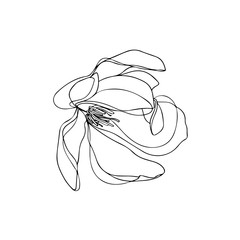 Magnolia in black and white. Flower ink sketch. Magnolia illustration isolated on white background. Hand drawn.