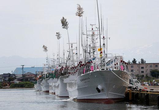 A fleet of squid fishing ships is seen at a port in Sakata