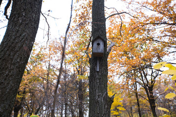 beautiful wooden nesting box in the autumn forest