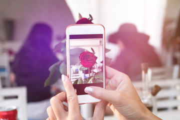 Woman taking photo of rose on her smartphone. Restaurant.