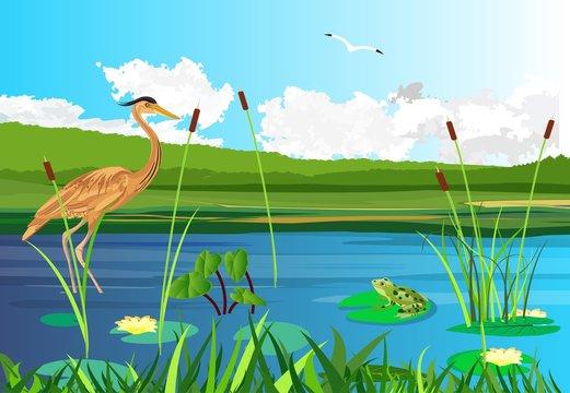 Red  heron on the lake, seagull flying,  lake, gragonflies, wetland landscape, vector wildlife