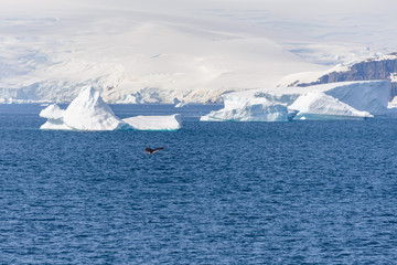 Spoed Foto op Canvas Antarctica Antarctic seascape with iceberg