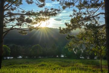 Sunrise through pineforest