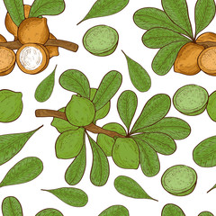 Macadamia. Plant. Fruit, leaves, branch. Background, texture, wallpaper, seamless. Sketch. Color