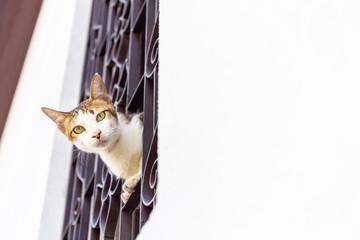 Cat at the windows