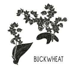 Buckwheat. Plant. Flowers, leaves, stem. Black silhouette on white background.