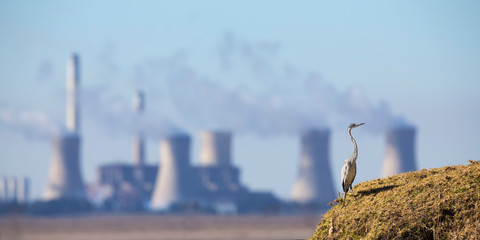 Landscape with a Grey Heron and power station with pollution in the background