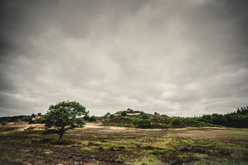 Lonely tree on a prairie in cloudy weather