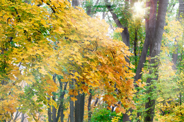 landscape autumn rays of the sun / beautiful landscape nature of, yellow forest and sun
