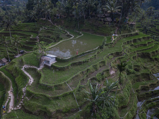 View of the top of the Tegallalang Rice Terraces by drone in Bali, Indonesia