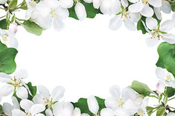 frame of Apple-tree flowers, background