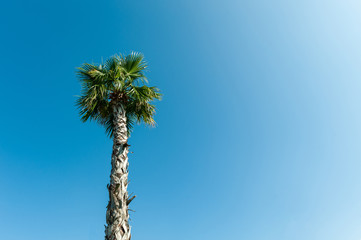Green palm tree against the blue sky