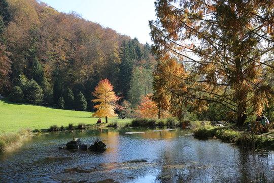 fotos de paisajes varios arboles cielo rios naturaleza