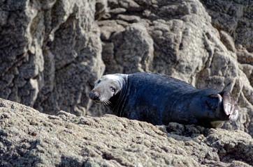 Seals west Wales