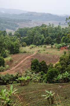Simple farm with fields and forest in highlands along Bamenda Ring Road, Cameroon, West Africa.