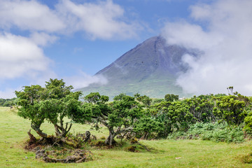 Image of trees below the big mountain of pico