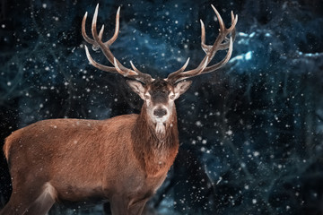 Fototapete -  Noble deer male in a snowy forest. Natural winter image. Winter wonderland.