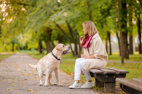A young woman sits on a bench in the park, and her Labrador walks nearby.