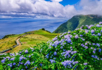 Photo sur Plexiglas Hortensia Image of beautiful landscape with hydrangeas and a path leading to the atlantic on the azores