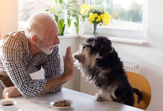 Senior man practicing tricks with dog