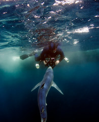 Diver with Blue Shark