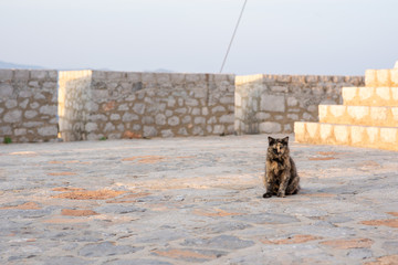 A beautiful wild, stray cat standing on a historic bastion on the island of Hydra in Greece.