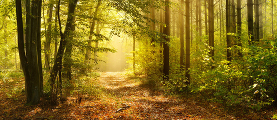 Papiers peints Forets Footpath through Enchanted Forest in Autumn, Morning Fog illuminated by Sunlight