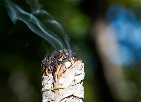 Smudging ritual using burning thick leafy bundle of white sage in forest preserve.