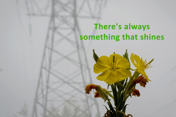 """Motivational picture. Bright yellow flowers on the background of a misty gray landscape. with the inscription: """"there is Always something that shines"""""""