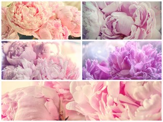 Delicate Pink Peonies Shabby Chic Retro Photo Collage