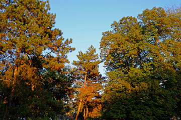 Park trees with autumn leaves
