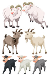 Set of goats and sheep