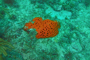 Red coral on the ocean floor