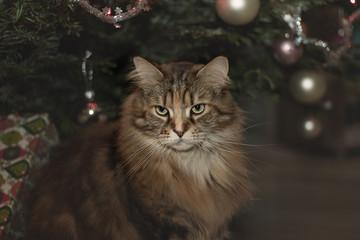 cat standing near the Christmas tree