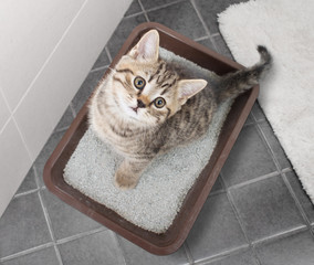Cat top view sitting in litter box on bathroom floor
