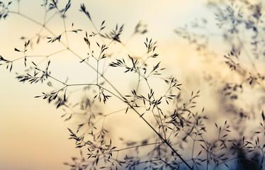 Zarte Gräser bei Sonnenuntergang