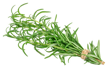 green fresh rosemary isolated on white background