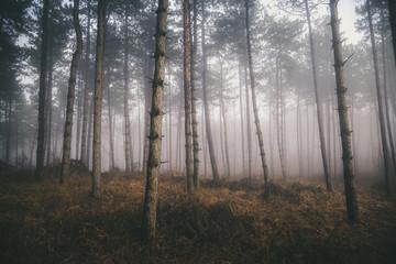 Morning fog in the deep dark forest