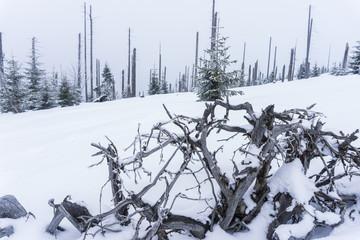 Baumwurzel im Schnee
