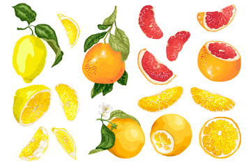 Set with 3 types of citrus fruit in vector