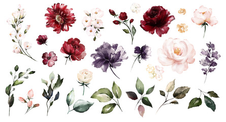 Set watercolor elements of roses collection garden red, burgundy flowers, leaves, branches, Botanic  illustration isolated on white background.  bud of flowers