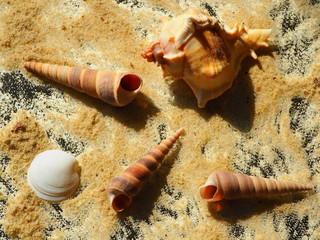 Meeresschnecken und Muschel