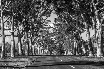 Road in the middle of the trees in black and white