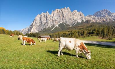 Schöne Naturlandschaft mit Kühen auf einer grünen Wiese mit schönen Bergen im Hintergrund