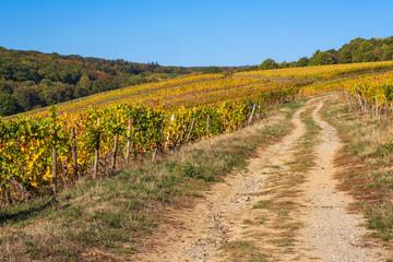 Weg in den Weinbergen von Kiedrich