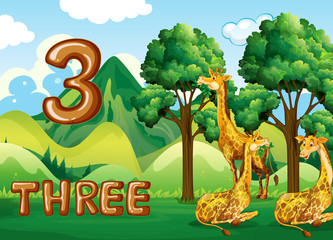 Three giraffe in nature