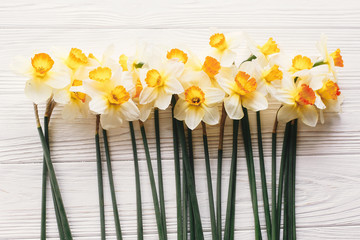 beautiful fresh daffodils on white wooden background top view. hello spring image with bright yellow flowers on rustic wood with space for text, flat lay. floral greeting card