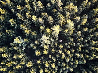 autumn trees in the forest aerial drone view from above, dji mavic