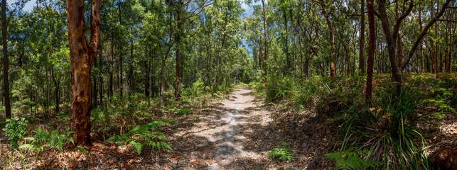 Avoca, Kincumber Mountain walking track